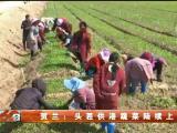 贺兰:头茬供港蔬菜陆续上市-20210416