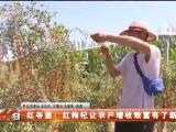 红寺堡:红枸杞让农户增收致富有了新盼头-20210804
