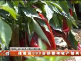 隆德县680亩拱棚辣椒产销两旺-20210804