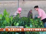 贺兰县习岗镇:花卉特色小镇赋能乡村振兴-20211019