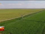 全面推进乡村振兴丨盐池:绿色引领产业升级 特色助推乡村振兴-20211008