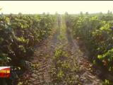 中国葡萄酒·当惊世界殊|张毅:种下百年酒庄梦-20211007