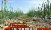 (新时代 新作为 新篇章)平罗县:节水项目助推农业高效发展-180705