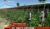 灵武:党建加产业 拓宽农民致富路-2018年7月1日
