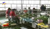 兴庆区花卉产业:品牌高端化 产业精细化-190418