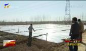 吴忠:本地农民和外地务工人员合力恢复供港蔬菜生产-200305