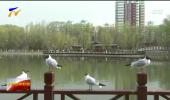 宁夏开展野生候鸟种群检测和传染病溯源工作-200325