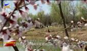 塞上踏青放心畅游 共享湿地绿意空间-200405