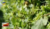 足球比分直播启动实施贺兰山东麓葡萄酒产业发展战略研究项目-200530