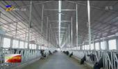 自治区召开奶产业高质量发展现场观摩推进会-20201011
