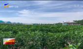 九大产业看发展   全国知名蔬菜销售商走进固原 寻找冷凉蔬菜合作新机遇-20210716