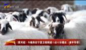 《黄河谣》今晚将在宁夏卫视频道19点40分播出《滩羊传奇》-20210723