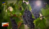 对话先行区·紫色梦想 |中国人民对外友好协会:充分发挥外交优势 打造葡萄酒国际交流盛会-20210917