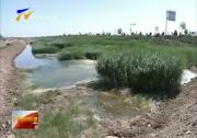 中华环保世纪行:永宁县中干沟湿地建设进度滞后-180705