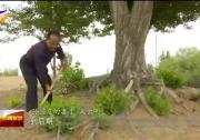 (愛國情 奮斗者)孫國友:執著治沙 無怨無悔-190607