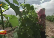 宁夏:积极参与国内国际双循环 葡萄酒产业未来可期-20201027