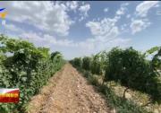 """九大产业看发展·聚焦国家级葡萄酒产业""""综试区""""丨新闻特写:共建首家葡萄酒综试区 为千亿综合产值赋能-20210711"""