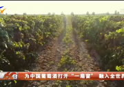 """为中国葡萄酒打开""""一扇窗""""融入全世界-20210714"""