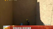 彭阳县发现大型西周墓葬-2017年7月15日