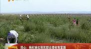 同心:枸杞映红移民群众增收致富路-2017年7月23日