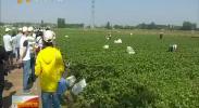 全国知名蔬菜销售商走进宁夏洽谈产销合作-2017年7月17日