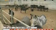 驴产业 带来农民致富新希望-2017年7月29日