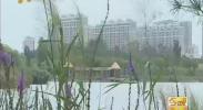 """银川市宝湖国家城市湿地公园有了专业""""管家""""-2017年8月21日"""
