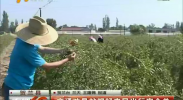 交通劝导站把好农民出行安全关-2017年8月22日