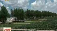 固原市原州区彭堡镇发展特色优势产业 助力脱贫攻坚-2017年9月23日