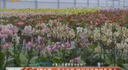 花卉交易 银川经济发展新亮点-2017年9月7日