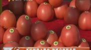 西红柿登上展台 种植户创新升级-2017年9月13日
