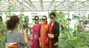记者带你逛花博:蔬菜来和花争相媲美 -2017年9月11日