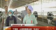 """(砥砺奋进的五年·榜样)丁秀琴:心系贫困群众的""""牛司令""""-2017年9月13日"""