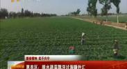 振奋精神 实干兴宁 惠农区:脱水蔬菜飘洋过海赚外汇-2017年10月11日