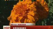(喜迎十九大·寻找秋天的色彩)秋季到彭阳来看花-2017年10月6日