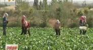 平罗:打造沙漠里的绿色基地-2017年10月27日