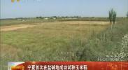 宁夏首次在盐碱地成功试种玉米稻-2017年10月11日