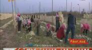 吴忠市红寺堡:长美萝卜寄托致富梦想-2017年11月7日