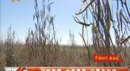 守护家园 大美草原 宁夏在行动-2017年11月4日