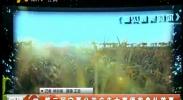 第二届宁夏公益广告大赛颁奖典礼落幕-2017年12月25日