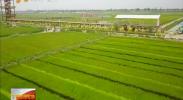 宁夏前11个月出口食品农产品18.61万吨 同比增长15.26%-2017年12月30日