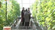 """宁夏设施葡萄焕发""""第二春""""-2017年12月10日"""