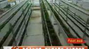 彭阳县红河镇:园区精准帮扶 产业脱贫攻坚-2017年12月23日