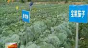 惠农区脱水蔬菜受美国市场青睐-2017年12月18日