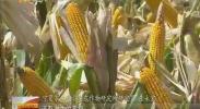 【最美科技人】王永宏:在芬芳泥土上著华章-2018年1月6日