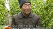 青铜峡:反季节瓜菜促农增收致富-2018年1月10日