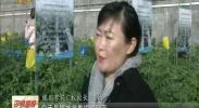 【2018 我们在落实】宁夏:6.8万新型职业农民为乡村振兴提高人才支撑-2018年1月16日