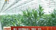 """银川:花卉种植迈入""""智能化""""时代-2018年1月20日"""