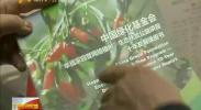 北京宁夏联手开展互联网生态扶贫-2018年3月25日
