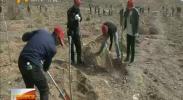 宁夏各地干部群众义务植树播绿 建设美丽家园-2018年3月30日